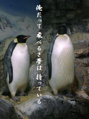 ペンギン(皇帝ペンギン)夢は持っている