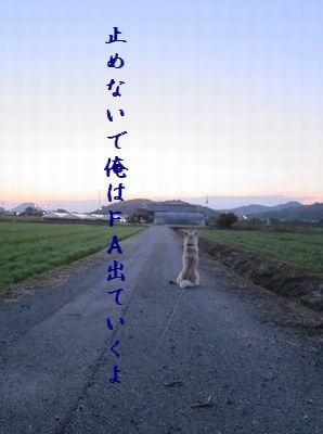 いぬ(帰りを待つ)FA犬