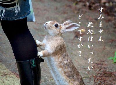 ウサギ(行かないで)此処はどこ?