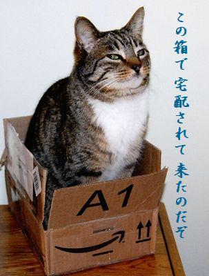 ネコと箱中宅配されてきた