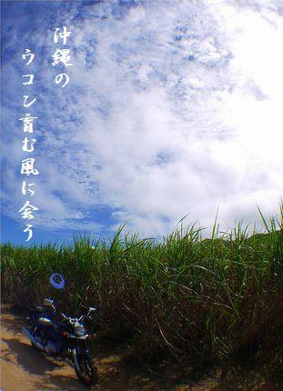 いしがき島(サトウキビ畑)文字