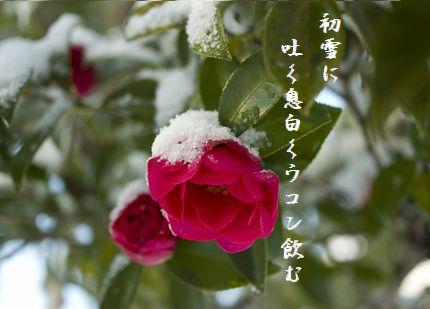 さざんか(雪化粧)文字