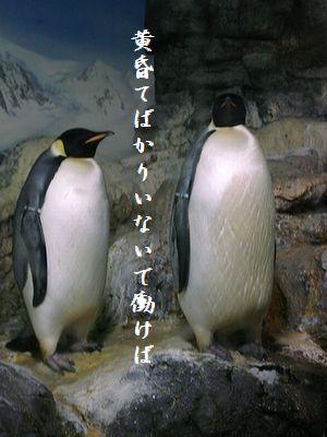 ペンギン(皇帝ペンギン)黄昏