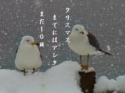 カモメの親子(冬・親不知)クリスマス