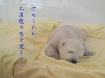 しろくま赤ちゃん二度寝