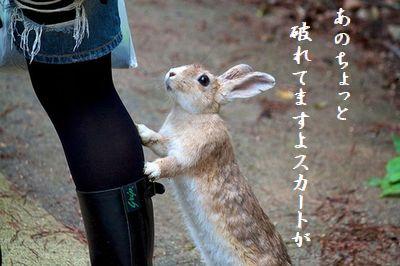 ウサギ(行かないで)スカート破れ英