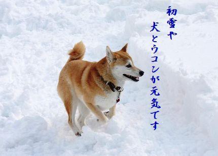 いぬと雪3元氣
