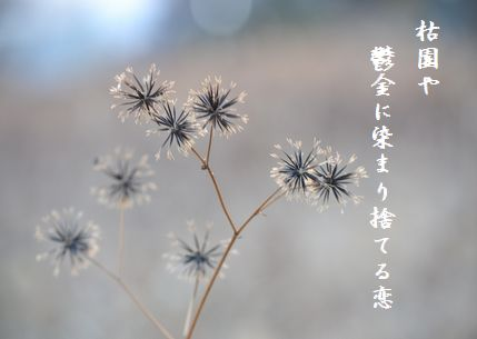 ふゆ枯れ6捨てる恋