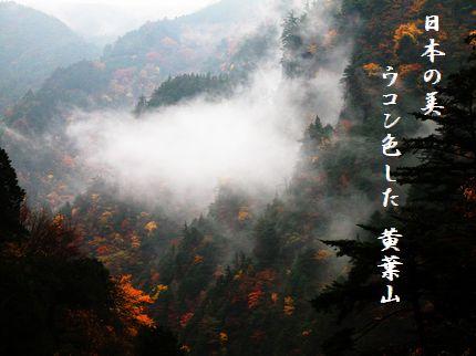 こうよう(みたらい渓谷早朝)文字