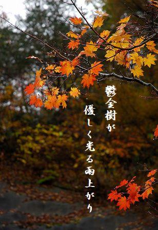 こうよう(飛騨)雨文字