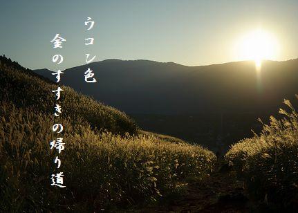 すすき(箱根仙石原2)文字11.6