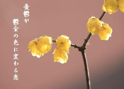 ふゆの花(蝋梅2)文字