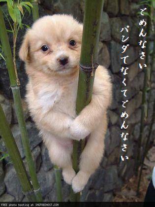 たけを登る犬文字