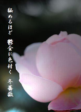 ふゆ薔薇2文字