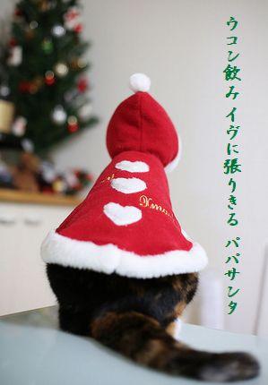 クリスマスキャット文字