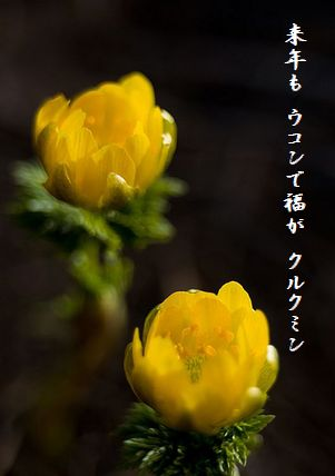 ふくじゅ草文字