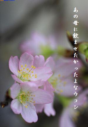 ふゆの花(桜2月)文字
