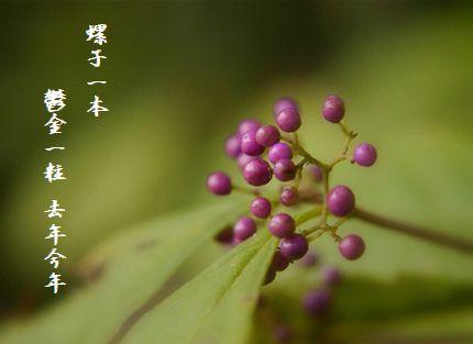 むらさきの実(冬)文字