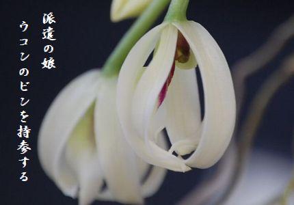 ふゆの花(ラン)文字