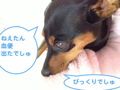 20130314-3.png