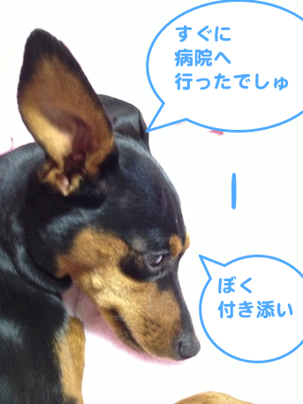 20130314-6.png