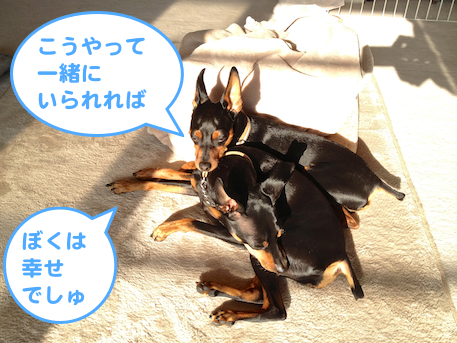 20130316-2.png