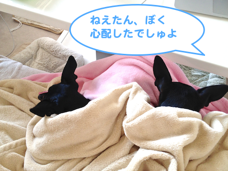 20130316.png