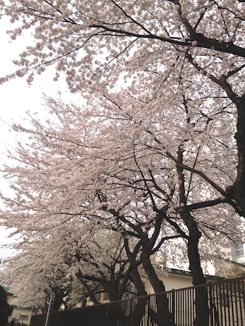 20130330-2.png