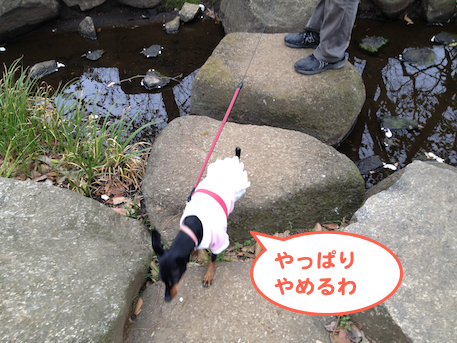20130405-1.png