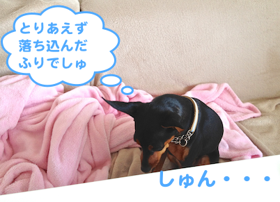 20130412-6.png