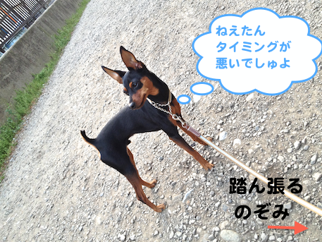 20130419-3.png