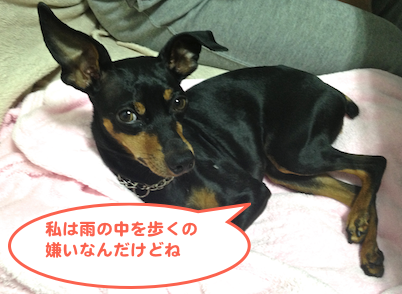 20130425-2.png