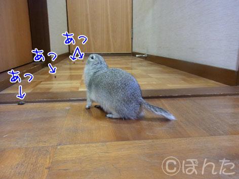 民族大移動2012_ぴきぴき11