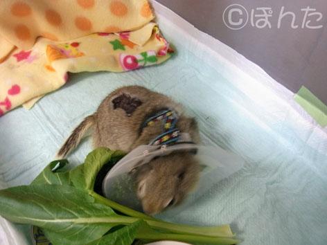 ぴきぴき_病院3