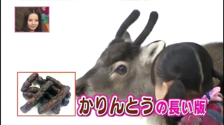芦田愛菜ちゃん【天才!志村動物園】に登場!「ツノは…かりんとうの長い版…」
