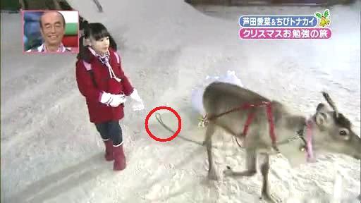 芦田愛菜ちゃん【天才!志村動物園】に登場!第2章、暴走する(?)ホーリー