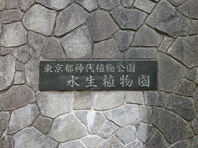 P046.jpg