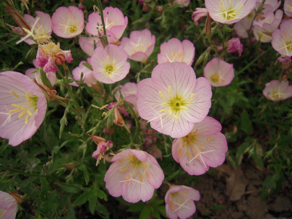 ピンクのお花☆