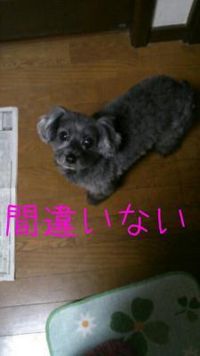 20121215234424.jpg