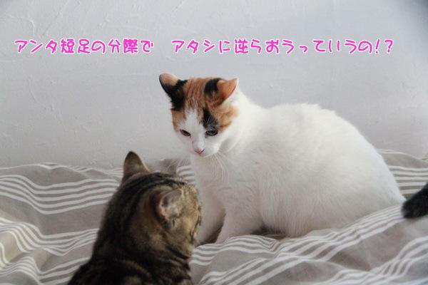 20140208004323c32.jpg