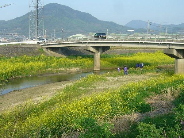 芥子菜と三野津橋