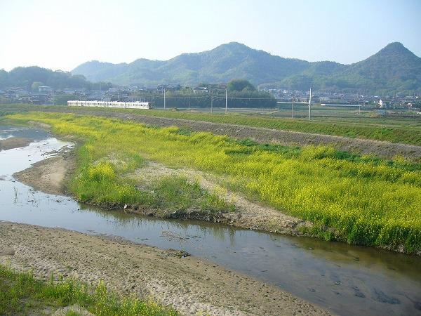 芥子菜の高瀬川