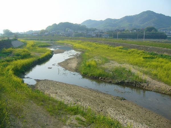 芥子菜の高瀬川2