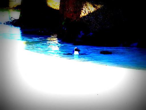 BouldersBeach_003.jpg