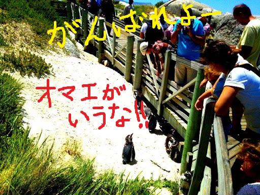BouldersBeach_009.jpg
