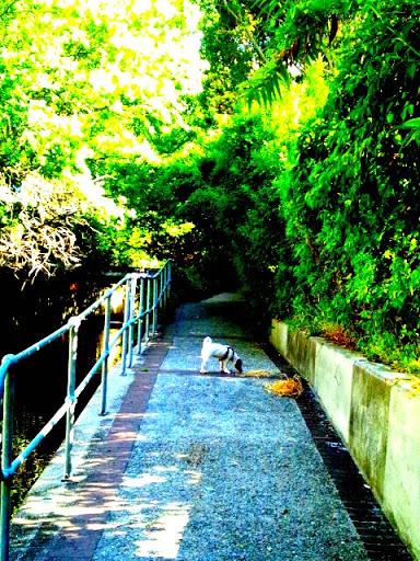 CapeTown_Dog01.jpg