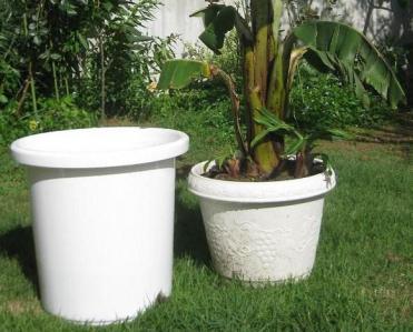 バナナ植え替え準備