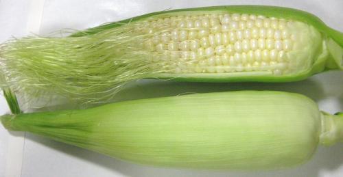 バニラッシュ収穫120723