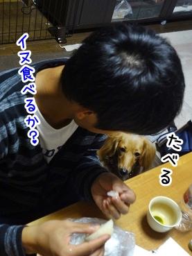 kinako1070.jpg