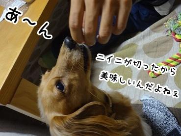 kinako1075.jpg